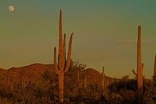 View At Sunset - Saguaro NP