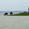 View Chilika Lake - Odisha