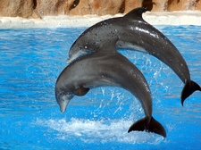 View Dolphin Jump - Tenerife Canarias