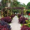 View Garden At Cameron Highlands - Pahang