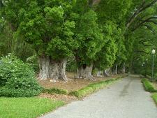 View Harry P Leu Garden - Orlando