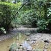 View Inside Danum Valley National Park