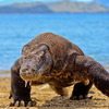 3-Day Komodo National Park Tour: Komodo Island and Rinca Island Trek