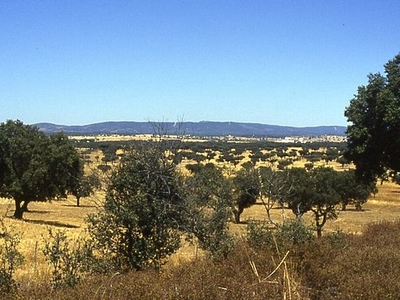 View Of Alentejo