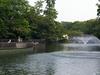 View Of Inokashira Park