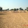 View Of Thar Desert