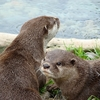 View Otters In Wellington Zoo NZ