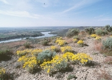 View Over Snake River In The National Monument