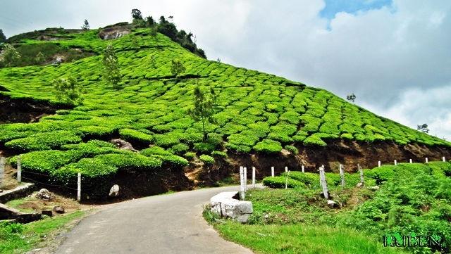 Best of Kerala Package Photos