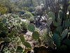 View Saguaro NP Tucson AZ