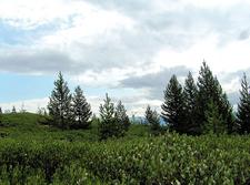 Views Along Taggart Lake & Beaver Creek Trail - Grand Tetons - Wyoming - USA