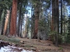 View Sequoia NP