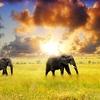 View Serengeti NP Tanzania