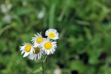 View Shikellamy State Park Flora - Pennsylvania