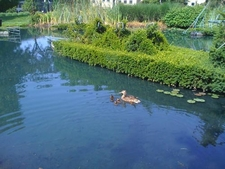 View Topiary Park Pond