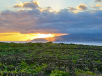 Paisagem da Cultura da Vinha do Pico Ilha