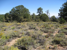 Vineyard Trail 131 - Tonto National Forest - Arizona - USA