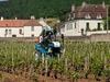 Vineyards Near Gevrey - Chambertin