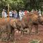 Visiting The David Sheldrick Elephant