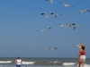 Visitors & Birds At Kure Beach NC