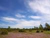 A Meadow On Vilsandi In Summer