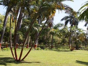 Waghai Jardim Botânico