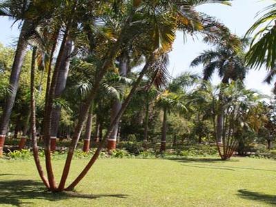 Waghai-Botanical-Gardens