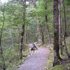 Waihua Hut to Galatea Road Trail