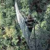 Waiohine Gorge - North Island - New Zealand