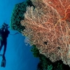 Wakatobi National Marine Park