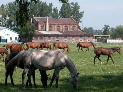 Walewice - Palace And Famous Horse Stud Farm