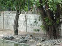 Wasan Granja de Cocodrilos