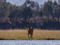 Mana Pools National Park Special - ThisAndThat Safaris