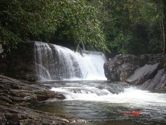 Sinharaja Rain Forest Tour Photos
