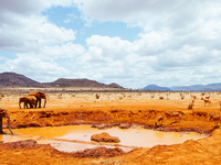 5 Days 4 Nights Amboseli - Tsavo West - Tsavo East