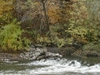Watonwan  River