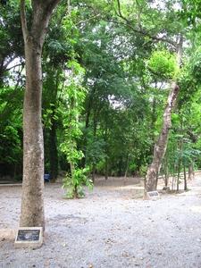 Wat Plug Mai Lai
