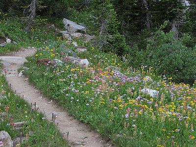 Webb Canyon Trail - Grand Tetons - Wyoming - USA