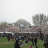 Weekend Cherry Blossom and Monuments Cruise in Washington DC