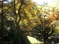 Wellington Jardim Botânico