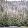West Chichagof Yakobi Wilderness