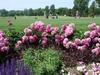 Westward Ho Country Club - Course 1