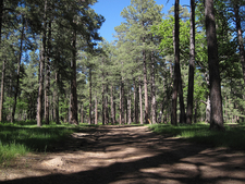 West Webber Trail 228 - Tonto National Forest - Arizona - USA