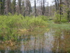 Wetlands Behind Stanley Lake