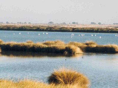 Wetlands In Donana