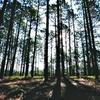 Weymouth Woods-Sandhills Nature Preserve