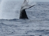 Whale Tail Flip
