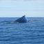 Whale Views 05