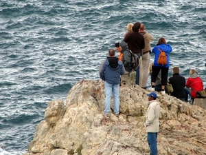 Hermanus Day Trip With Seasonal Whale Watching Photos