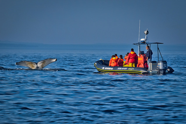 Whale Watching Tour to Quebec Photos